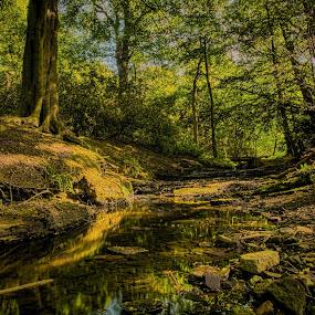 Arroe Brooke by Ian Yates ヅ - Landscapes Forests