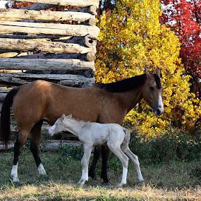 by Tareena Horton - Animals Horses