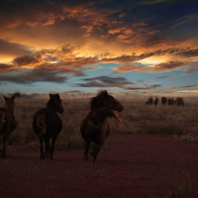 Wild horses of the Danube Delta by Dragos Birtoiu - Animals Horses ( wild, free, sky, horses, sunset )