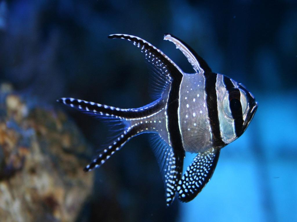 Fish HD Wallpaper - screenshot
