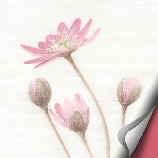 [Botanical Art] Hepatica Atom LOGO-APP點子
