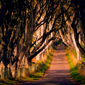 The Dark Hedges by Lawrence Ferreira - Landscapes Forests ( ireland, colorful, green, mysterious, dark hedges, irish, road, travel, antrim, large trees, imaginative, adventure, hedges, travel photo, dark, trees, northern ireland, tree lined road, ghostly,  )