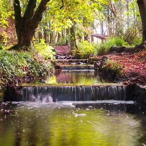 Autumn in Littlewood by Lynnie Adams - Landscapes Waterscapes ( autumn, long exposure, woods, colours,  )