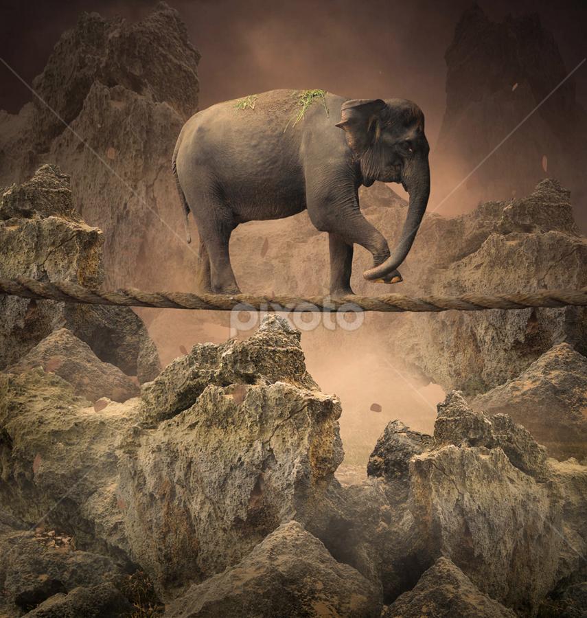 by Alfa Oldicius - Digital Art Animals