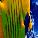 Color Fish LWP No2 Pro icon