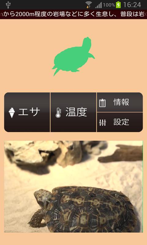 【無料育成】ポケット爬虫類(カメ)~パンケーキ~ - screenshot
