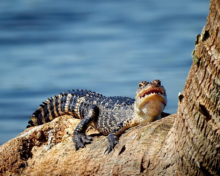 by Dawn Riddle - Animals Reptiles