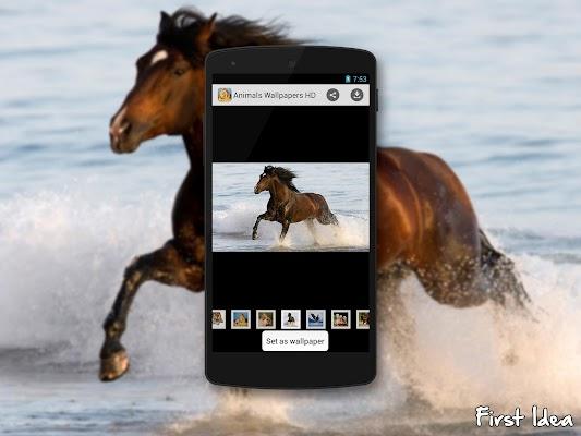 Animals Wallpapers HD - screenshot