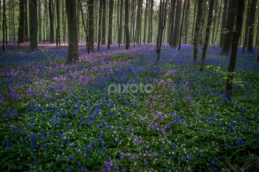 Haller bos by Wim Moons - Landscapes Forests