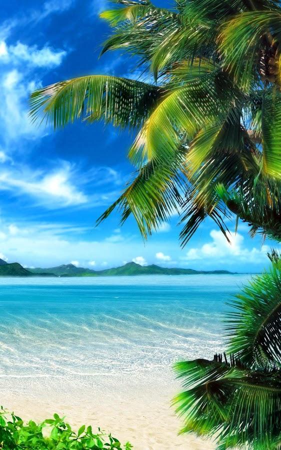 beach live wallpaper - photo #13