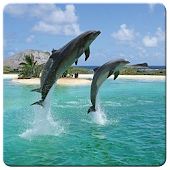 Jumping Dolphin Live Wallpaper