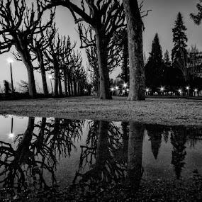 City Park by José Sobral - Black & White Landscapes ( parque verde, coimbra, 2014, pb, josé sobral )