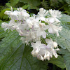 Unknown Flower