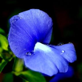 Bloom by S Nair - Flowers Single Flower