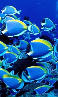 Coral Fishes Live Wallpapers - screenshot thumbnail