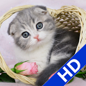 Find Diff-Cute Cat Album icon
