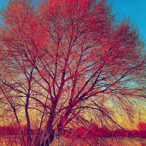 Red Tree by Nat Bolfan-Stosic - Nature Up Close Trees & Bushes ( red, tree, lake, day, alone )