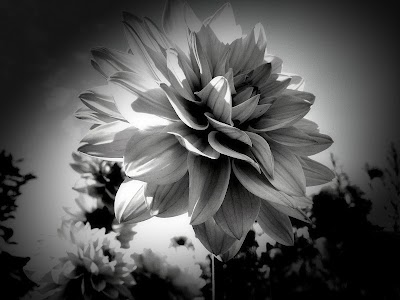 Dramatic Black & White v2.20