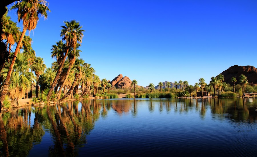 Papago Park  by Deb Bulger - Landscapes Waterscapes ( ponds, mountain in city, nature, waterscape, serene, palm trees, landscape,  )