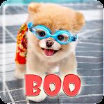 Boo Cutest Dog Wallpaper