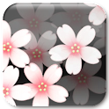 Sakura Clock icon