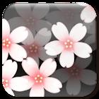 Sakura Clock icon