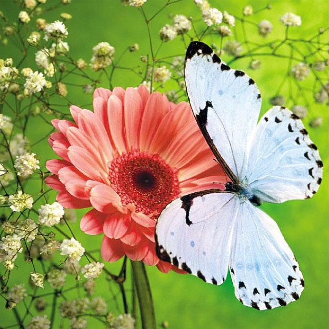 Butterflies Jigsaw Puzzles - screenshot