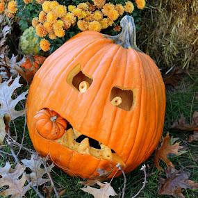 by Missy Grove Horne - Public Holidays Halloween ( , halloween, pumpkin, carved )