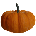 Pumkin Sticker icon