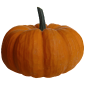 Pumkin Sticker