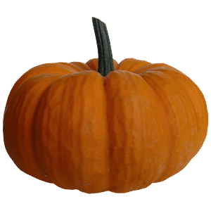 pumpkin wallpaper for android