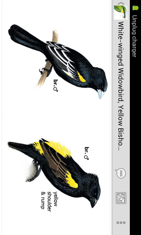 Sasol eBirds- screenshot