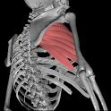 3DAnatomy icon
