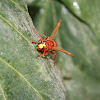 Red bee on a leaf