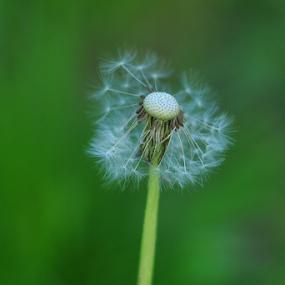 by Dragutin Vrbanec - Flowers Flowers in the Wild