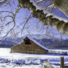 Morning light on this beautiful little barn in the snow.  by George Herbert - Landscapes Weather