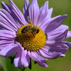 Friendship by Iztok Urh - Flowers Flowers in the Wild