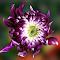 IMG_0495-12.jpg