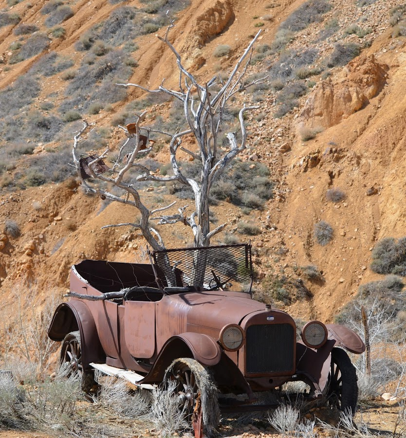 Ol' Rusty by Ed Hanson - Artistic Objects Antiques ( car, old, tree, brown, rust )