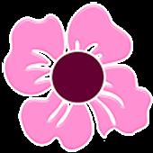 THEME - Cherry Blossom