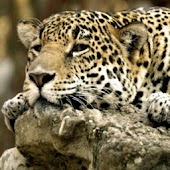 Nice Wild Animals Pics
