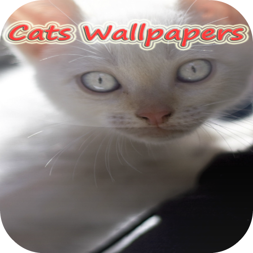 Galaxy young Cat Wallpapers 個人化 App LOGO-APP試玩