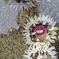 Invertebrados marinos de Chile