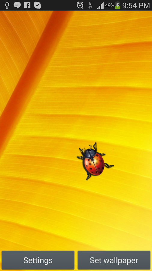 Lady Bug Live Wallpaper - screenshot