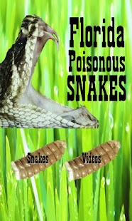 Florida Poisonous Snakes - screenshot thumbnail