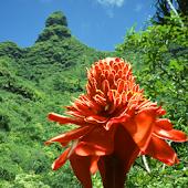 Kauai Essential Guide