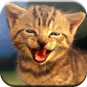 Laughing cute cat
