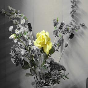 Selective Flower by Palak Patel - Flowers Flower Arangements ( selective color, click, flower, pwc )