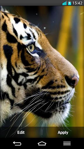 Tiger Live Wallpapers screenshot