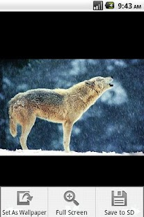 Wolf Wallpaper - screenshot thumbnail